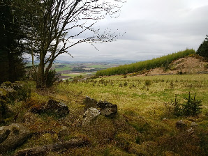 Spectacular views from the Tappie Tower trail at Kirkhill Forest near Aberdeen